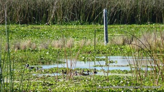 Mira de medición, rodeada de agua y vida