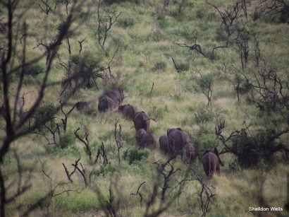 Elephant Herd in the Early Morning at Hluhluwe Imfolozi Game Reserve
