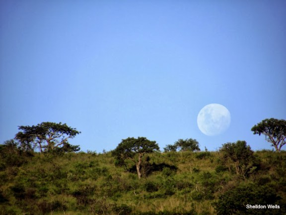 late afternoon moon over hluhluwe imfolozi game reserve