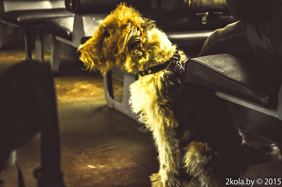 Собака электроника