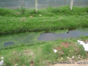 Los vallados contaminados por la aguas residuales de la floricultura.