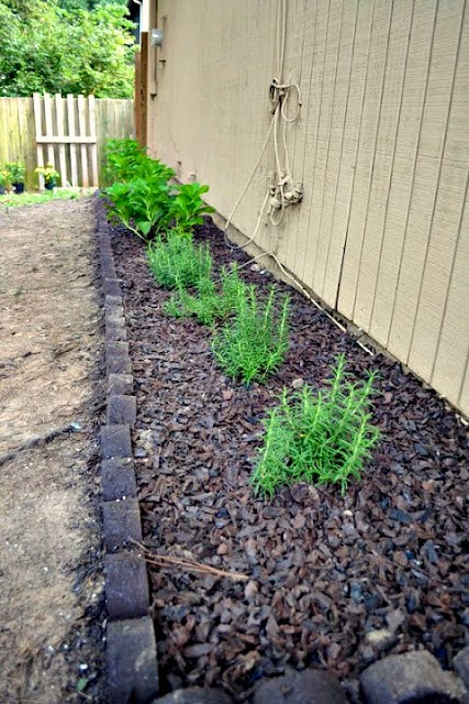 fall planting - backyard makeover