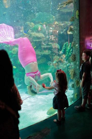 Silverton Aquarium (25 Best Free Things to Do in Las Vegas).