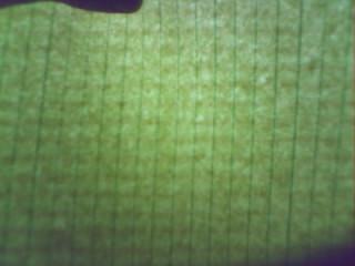 Murang Yellow Pad (4/4)
