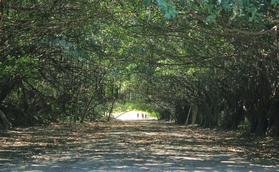 台南新營景點,長勝營區綠色隧道