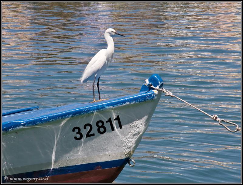 Фото: Гордый птах