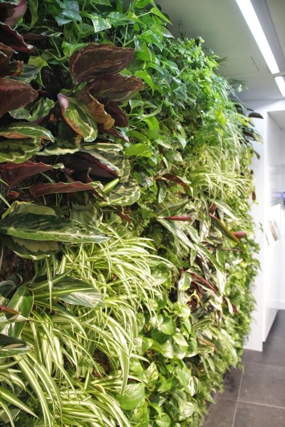 Jardines verticales y paisajismo en madrid for Jardines verticales espana