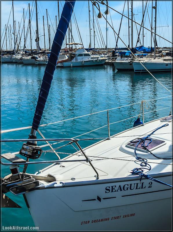 Одно фото / Тель Авив, Seagull