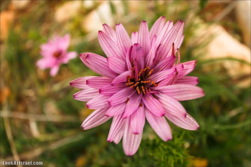 Празднично цветочное