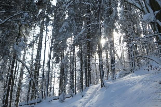 Durch den Winterwald eine Spur nach oben zu ziehen, war recht mühsam