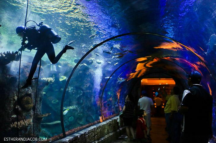Shark Reef Aquarium at Mandalay Bay Las Vegas NV.