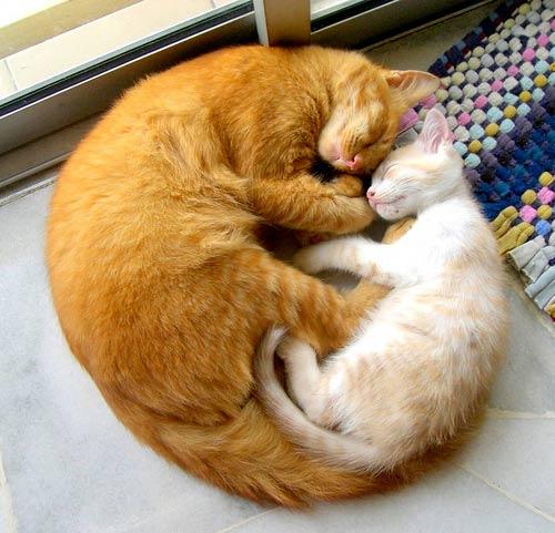 Animales cariñosos: Gatos