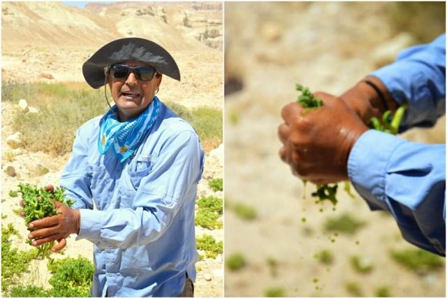 negev-woestijn-israel