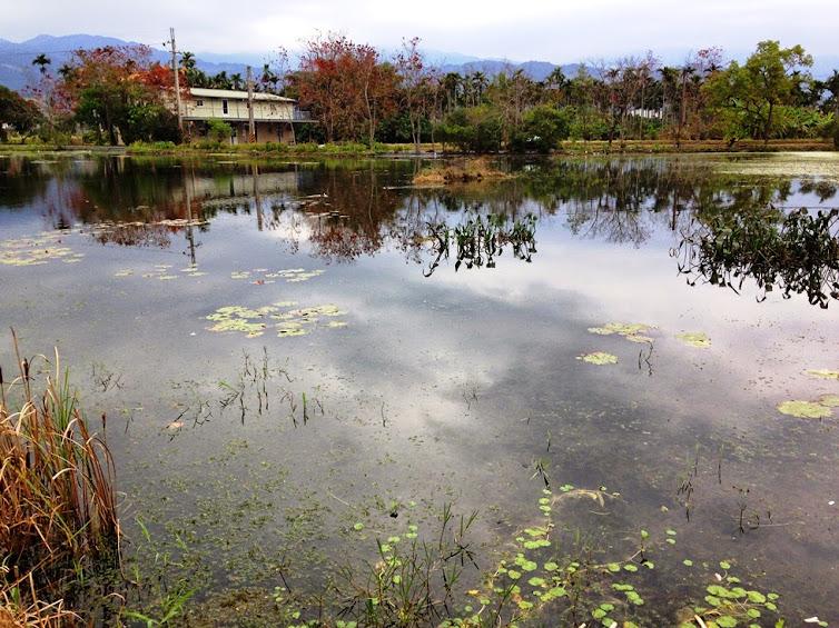 宜蘭景點推薦-水草生態美食.龍蝦生態之旅【勝洋水草休閒農場】