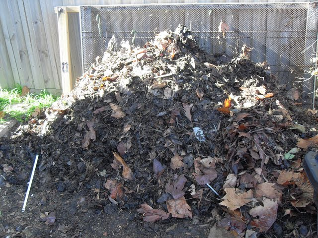 Coffee Grounds in Compost (5/6)