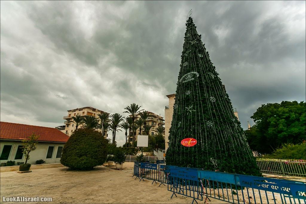 Рождественская ёлка в Яффо