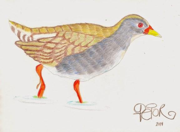 Polluela piquiroja