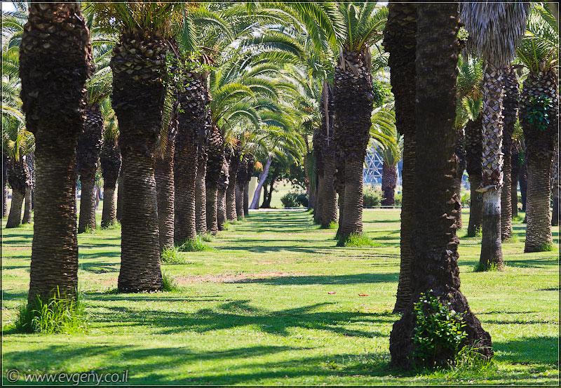 Одно фото / Израиль, Тель Авив, парк а-Яркон