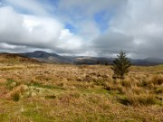 Whin Rigg in the distance from Muncaster Fell