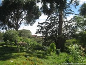 Caballo pastando, Humedal de Córdoba