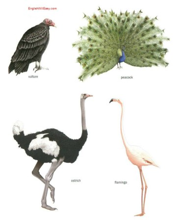 Екземпляри d'oiseaux