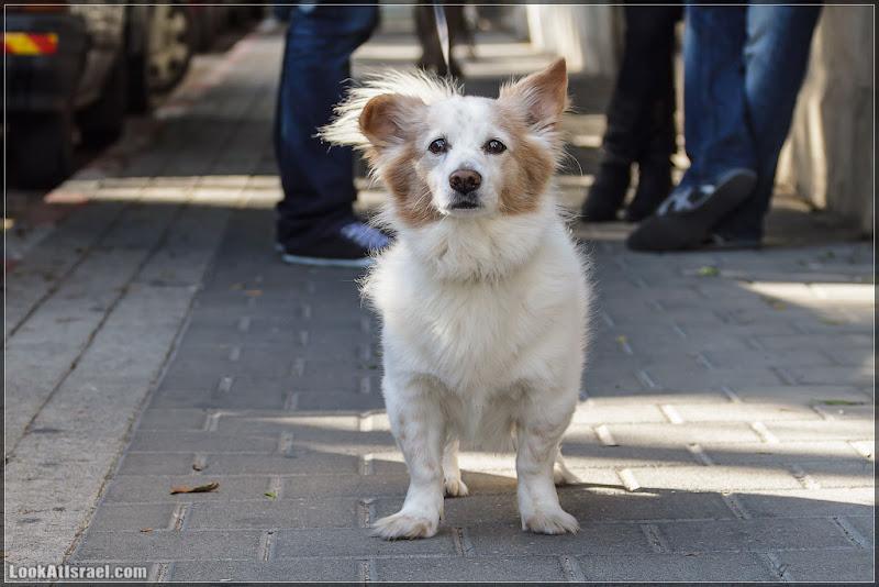 Собаки без людей