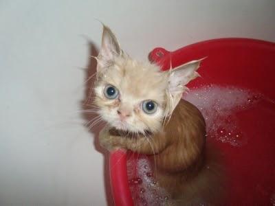 Web log страждущего: Мокрые кошки