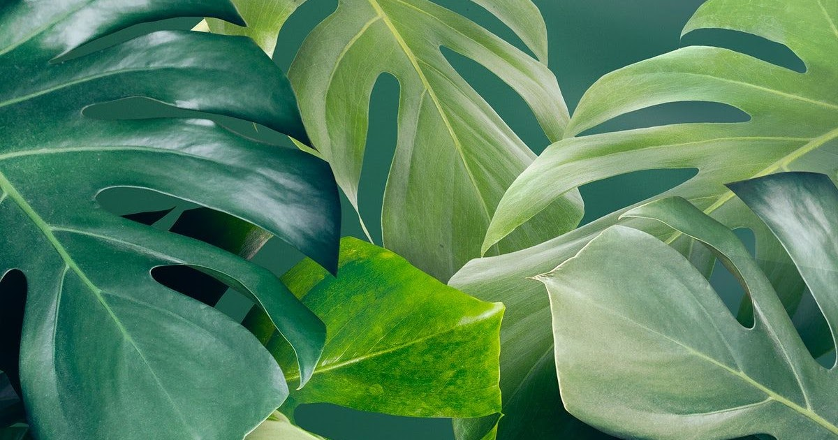 See more ideas about sage green, mint green aesthetic, green aesthetic. Green Aesthetic Background Pinterest / Pastel Green ...
