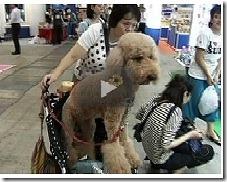 Petshop no Japão