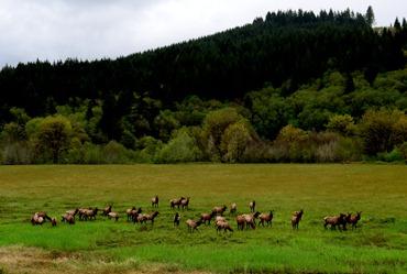 elk along Highway 34