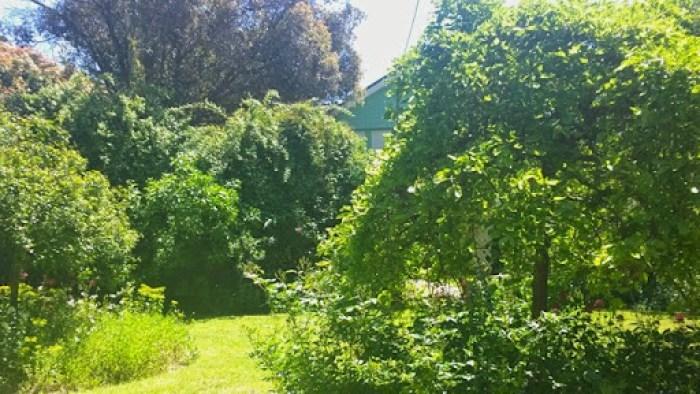 jenny attwills place oct 2014 (177)