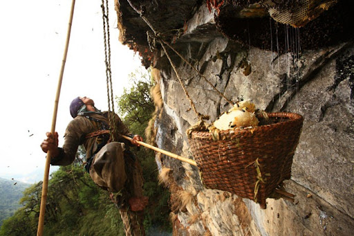 honey-cacciatori-nepal-28