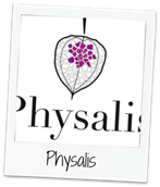 Physalis