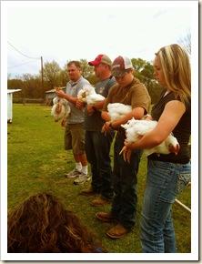 picking chicken 3