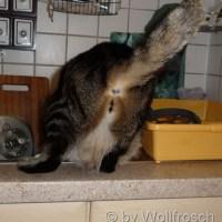 Softpo*rno mit Katze