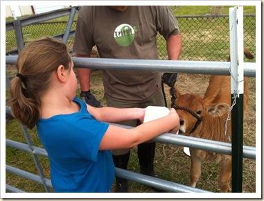 kate feeding chloe