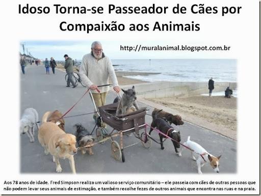 Idoso Torna-se Passeador de Cães por Compaixão aos
