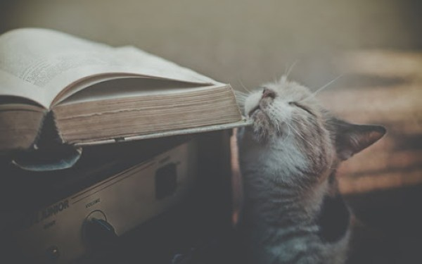 Book and cat