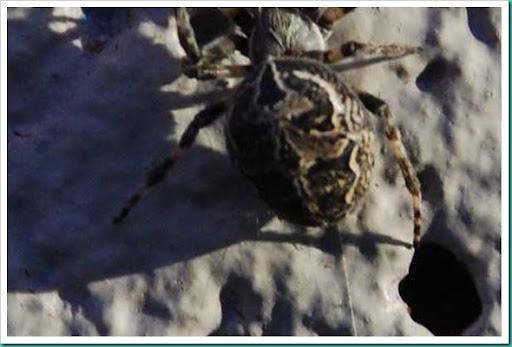Spider Skull Close Up