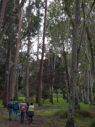 Bosque de Urapanes humedal cordoba