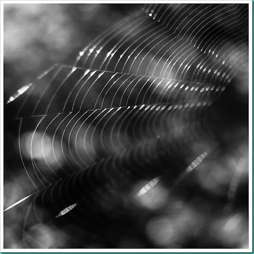 Spiderweb-Caitlin Brookes