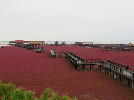 panjin-red-beach-7