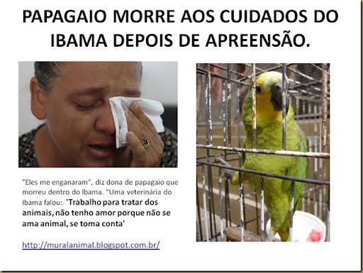 PAPAGAIO MORRE AOS CUIDADOS DO IBAMA DEPOIS DE