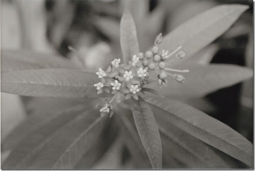 Botanical-Gardens-7-AP-56-Y-5-M-7