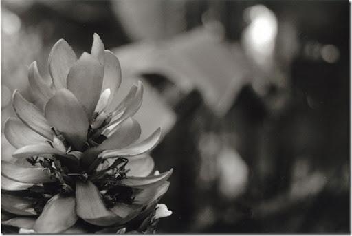 Botanical-Gardens-1-AP-56-Y-5-M-7