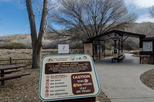 Big Morongo Canyon (63 of 63)