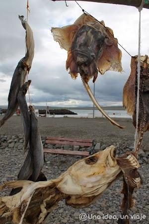 Hvammstangi-Islandia-2.jpg