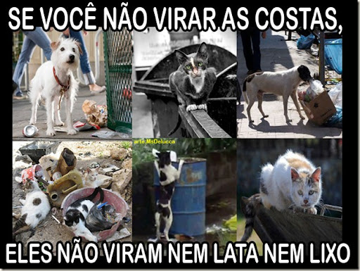 vira_lata