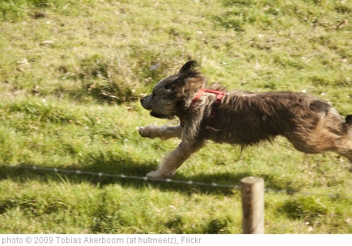 'Running Dog' photo (c) 2009, Tobias Akerboom (at hutmeelz) - license: http://creativecommons.org/licenses/by/2.0/