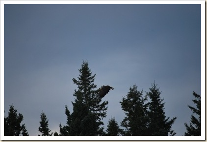 eagle flying in tree